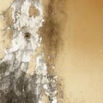 Toronto asbestos removal company, Burlington Asbestos Removal, Toronto Mold Reports