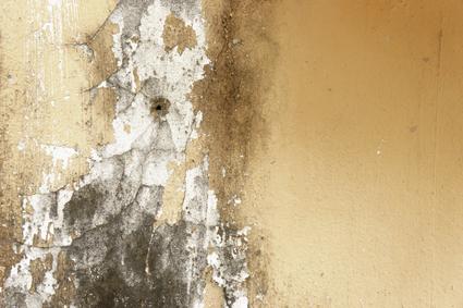 Burlington Asbestos Removal, Toronto Mold Reports
